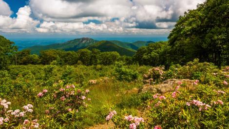 Mountain laurel framing a gorgeous view in Shenandoah National Park