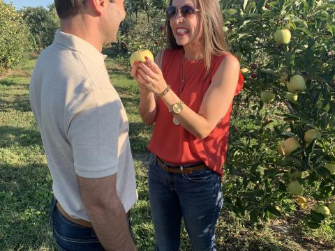 Picking fresh apples at the Apple Festival at Reid's Orchard in Owensboro, Kentucky