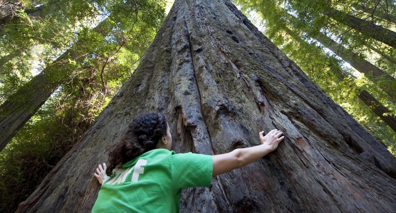 Image result for the Redwoods